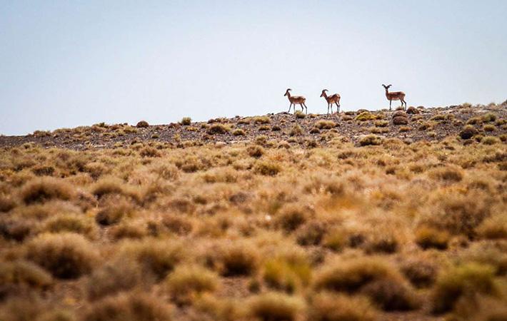 آزادسازی گونه های جدید حیوانات در محیط زیست طبیعی