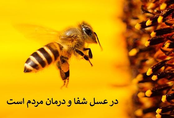 حدیث عسل در اسلام