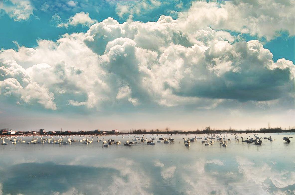 مهاجرت پرندگان به تالاب فریدون کنار