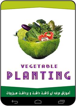 کاشت به روش وان بال کاشت سبزی بر حسب روش تولید :: نحوه کاشت سبزیجات