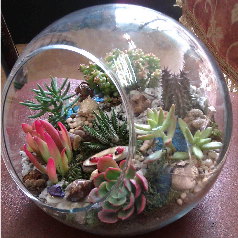 تراریوم چیست :: باغ شیشه ایتراریوم