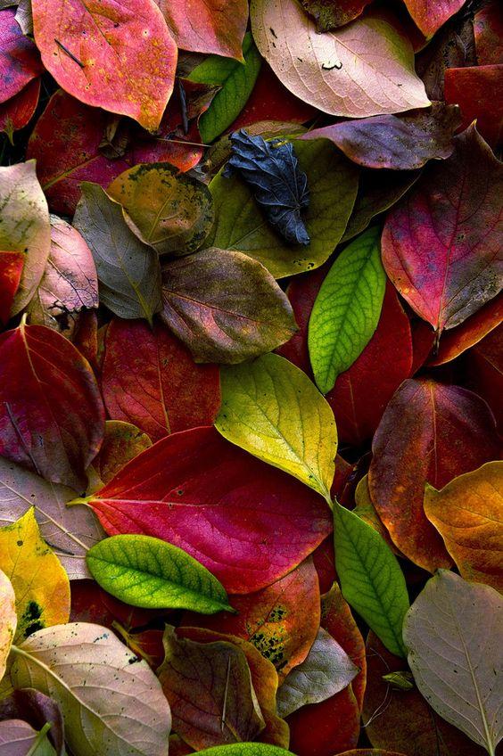 عکس برگای پاییزی برای بک گراند موبایل