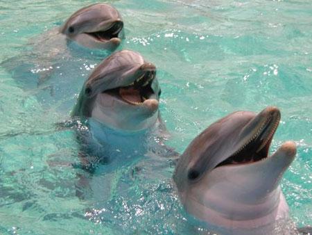 آواز شفابخش دلفین