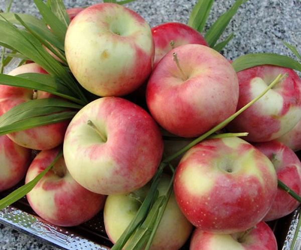 خواص و فواید جادویی سیب گلاب