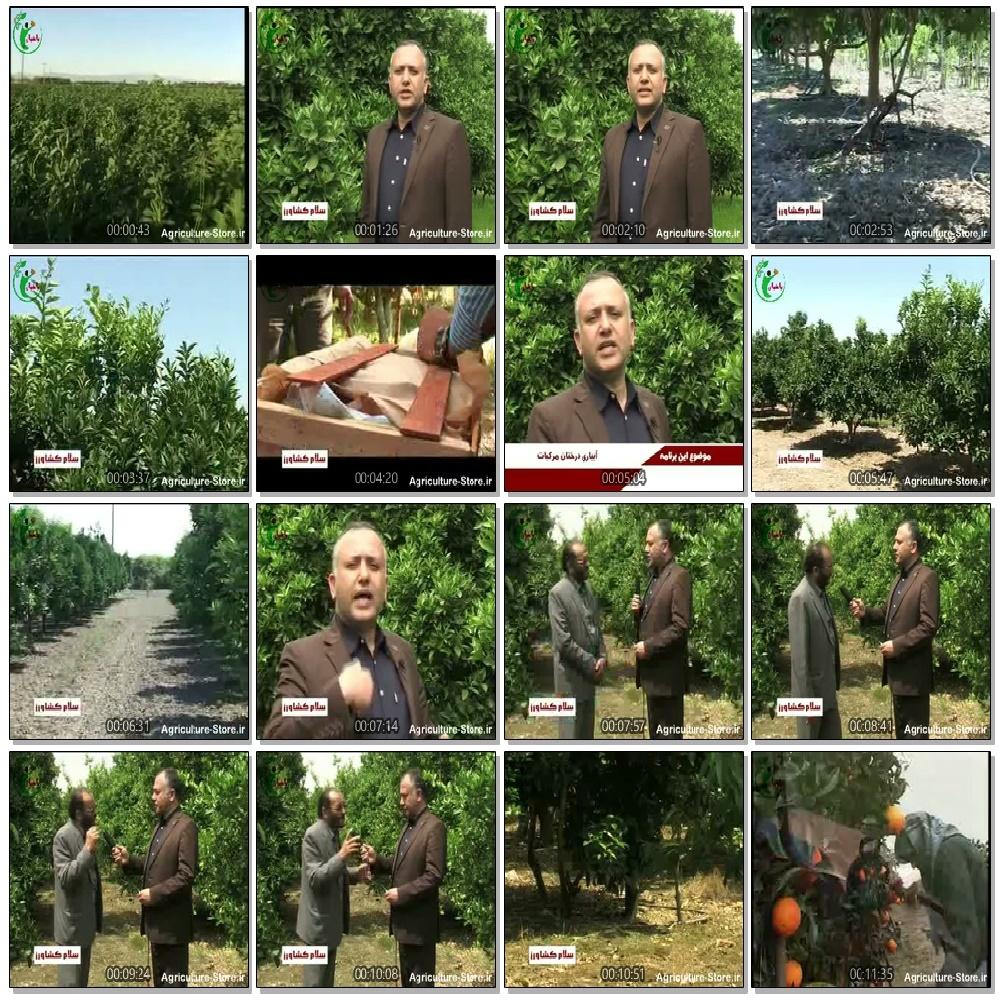 راهنمای آبیاری درختان مرکبات