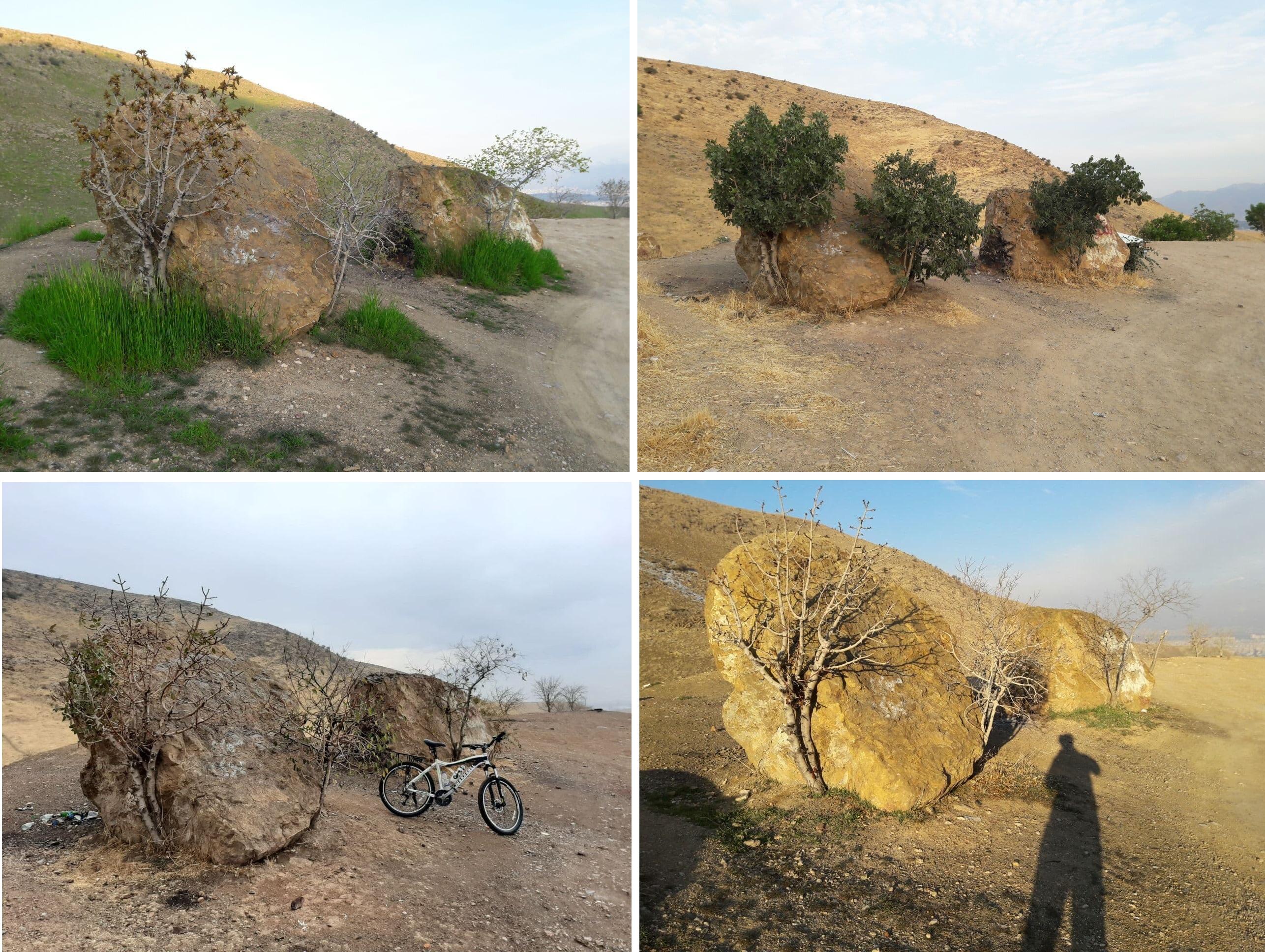 سه درختون در چهار فصل سال