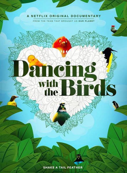 Dancing with the Birds 2019