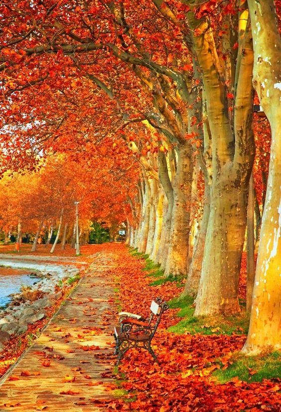 عکس جاده پاییزی برای بگ گراند موبایل