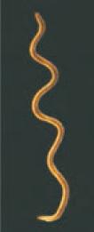 جواب فعالیت صفحه 118 علوم تجربی نهم - باکتری مارپیچی