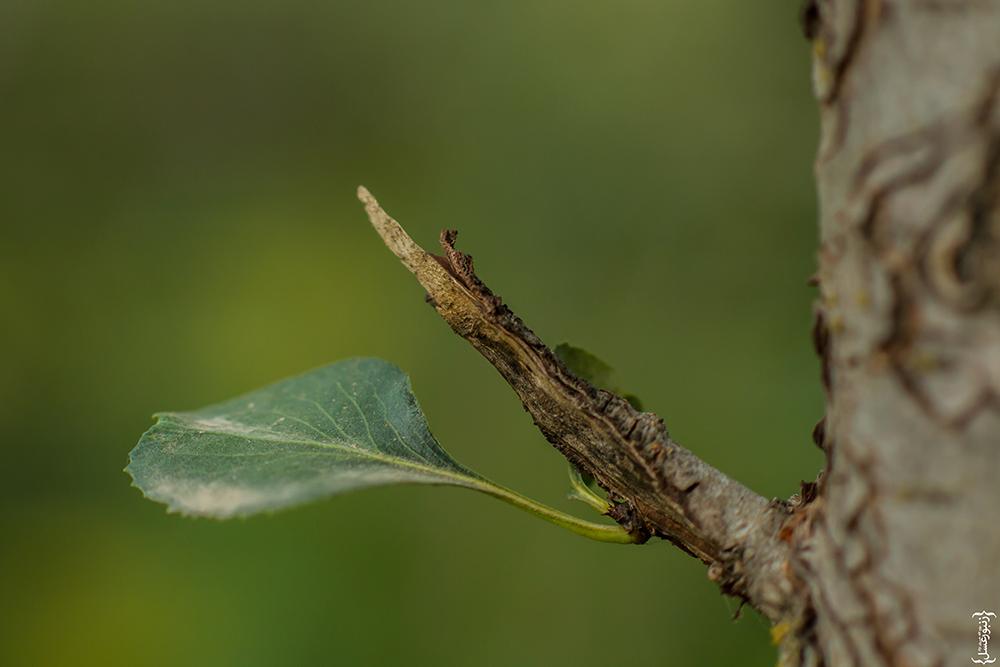 لباس درخت