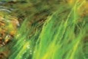 جواب فعالیت صفحه 119 علوم تجربی نهم - جلبک های سبز