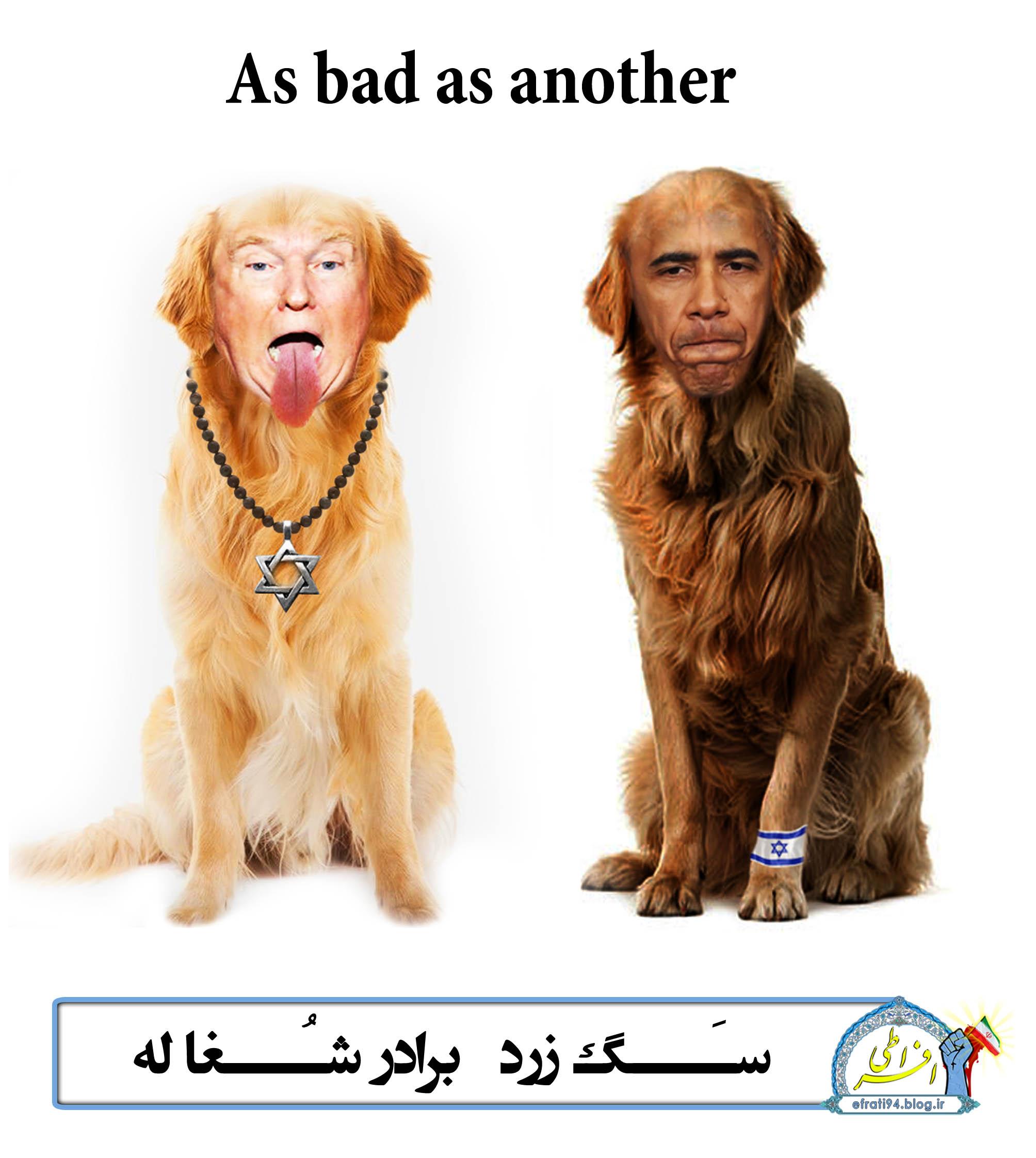 سگ زرد